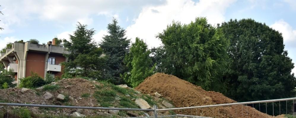 Redona, tagliati alberi senza permesso «Ne ripiantino per 27 mila euro»