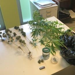 Coltivava marijuana sul balcone Denunciato 61enne a Castel Rozzone