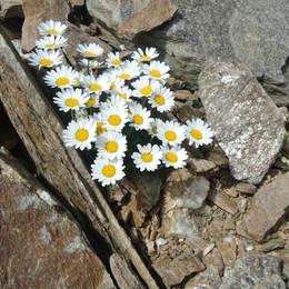 «Bellezza pura tra le pietre...»