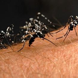 Lotta alla zanzara tigre in città Nell'estate 2019  il 40% in meno