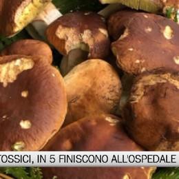 Funghi tossici, cinque al Pronto Soccorso Ats: altri quattro episodi in sette giorni»