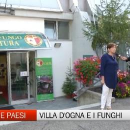Gente e Paesi, la mostra del fungo di Villa d'Ogna