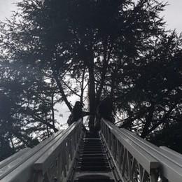 Gazzaniga, fulmine su un pino Guasto alla linea elettrica