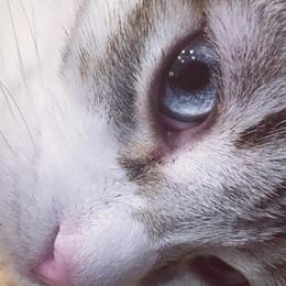 Casnigo, gatto si introduce in casa Graffia una donna che finisce in ospedale
