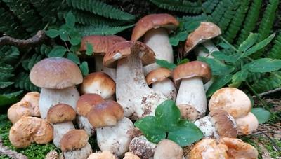 A caccia di funghi