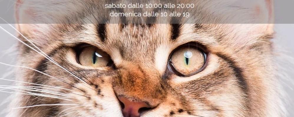 amanti del gatto servizio di incontri modo migliore per venderti su un sito di incontri