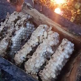 Nella Bat box il nido dei calabroni Cene, vigili del fuoco bonificano il parco