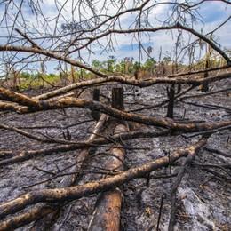«Qui gli alberi sono denti anneriti» Un bergamasco racconta l'Amazzonia
