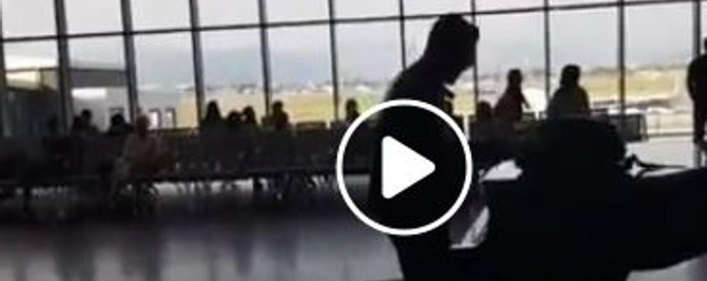 All'aeroporto di Orio si fa anche musica Matthew Lee si esibisce in un live - Il video
