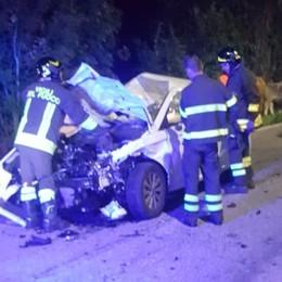 Auto si schianta contro una mandria   Muoiono 5 mucche nella notte a Gromo