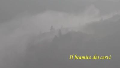 È il periodo degli amori Il bramito dei cervi in Val Seriana