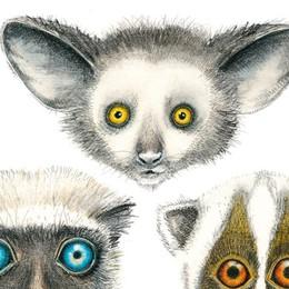 Florence Giraud  «scopre» i mammiferi