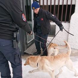 Foppolo e Carona, carabinieri in pista  Controlli antidroga: segnalato un uomo