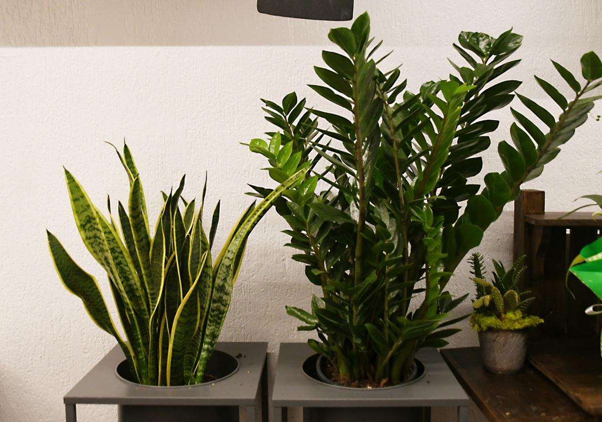 Piante Verdi Da Appartamento Facili Da Tenere.Piante E Fiori D Appartamento Belli E Facili Da Mantenere Eppen
