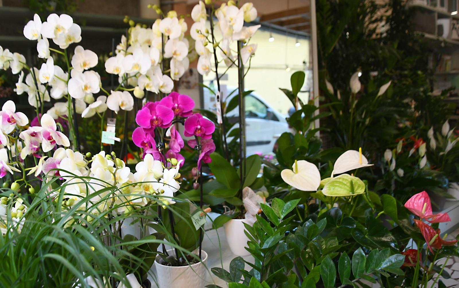 Immagini Piante E Fiori piante e fiori d'appartamento belli e facili da mantenere