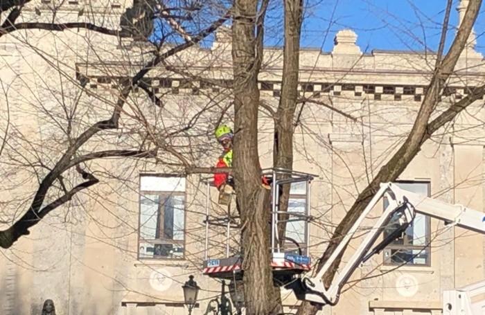 Il taglio degli alberi in piazza Dante