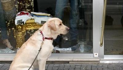 Richiamare il cane:  cosa fare e cosa no