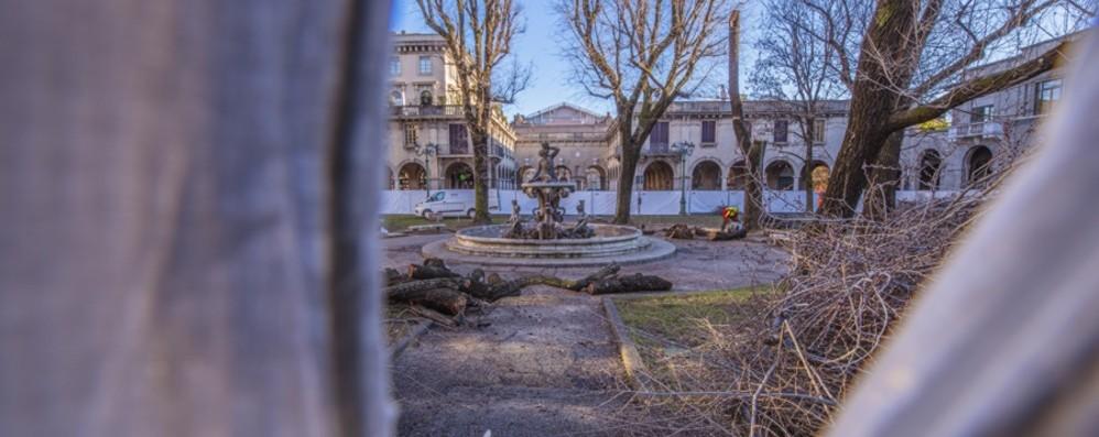 Taglio degli alberi in piazza Dante Ecco le spiegazioni del Comune