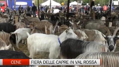Cene, la fiera delle capre della Valle Rossa