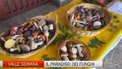 Villa d'Ogna, i funghi e la giornata nazionale della micologia