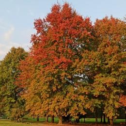 «Sfumature d'autunno...»