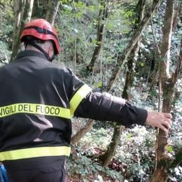 Cade in mountain-bike nel bosco Gamba rotta per un 41enne di Zogno