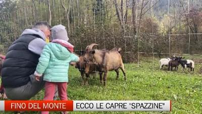 Fino del Monte, le capre al parco Res