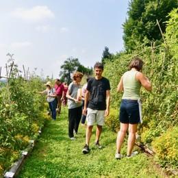 Come hanno vissuto il lockdown gli orti urbani di Bergamo e provincia (che ora ripartono più verdi che mai)