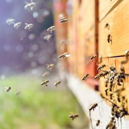 Dove le api non muoiono ancora: conversazione con due apicoltori dell'alta Valle Seriana