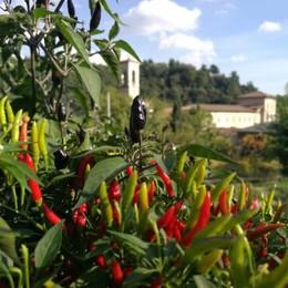 Ecocentrismo, ovvero come l'Orto Botanico ci invita a (ri)entrare in sintonia con la natura