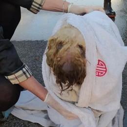 Charlie cade in una pozza biologica Salvato dai Vigili del fuoco - Le foto