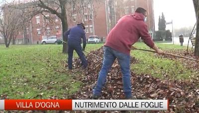 A Villa d'Ogna le foglie vengono riciclate dagli allevatori