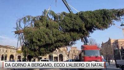 Da Gorno a Bergamo, il maxi albero di Natale arriva dalla Val Seriana