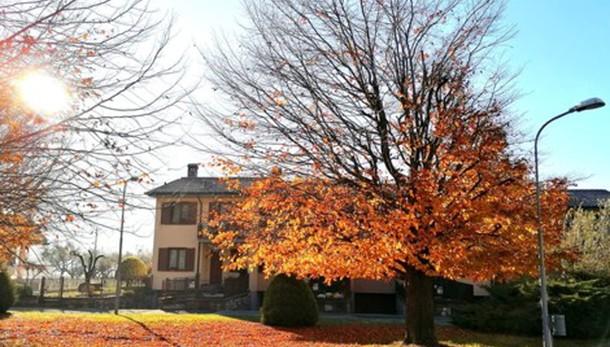 Le ultime foglie