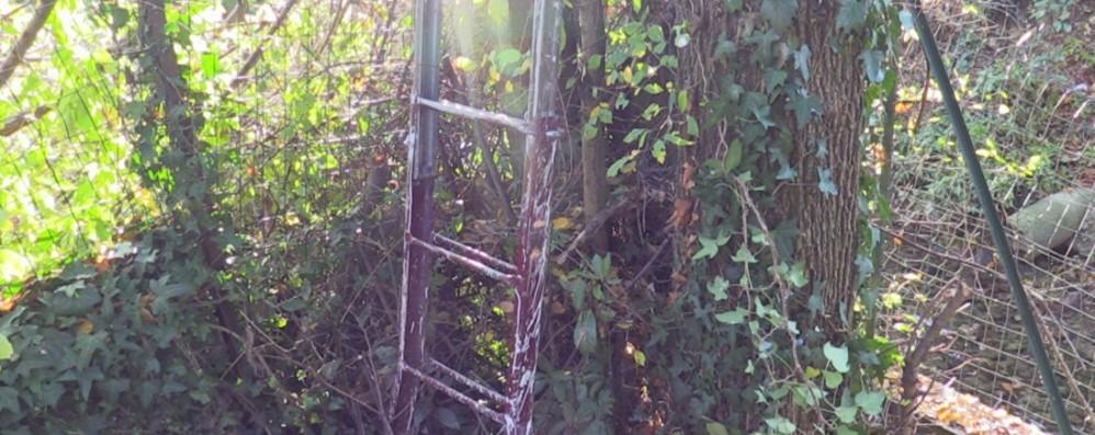 Colto da malore mentre taglia una pianta Pensionato di 76 anni muore a Carobbio