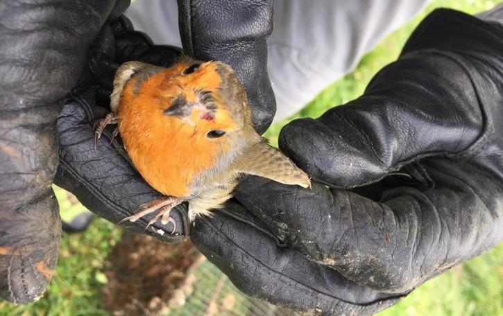 Denunciati 106 bracconieri, sequestrate  400 trappole illegali e 2mila uccelli protetti