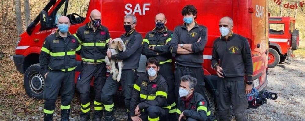 Disperso da 10 giorni sul monte Venturosa I Vigili del fuoco ritrovano il cane Ivan