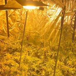 Un'apertura dietro la cassettiera in camera I carabinieri scoprono serra di marijuana