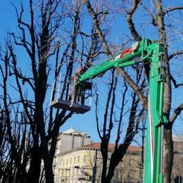 Bergamo, 20mila alberi in 5 anni Tutte le potature, i tagli e le piantumazioni