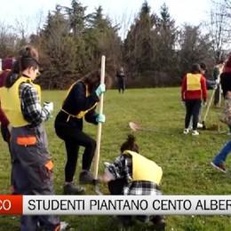 Gli studenti dell'Artistico  piantano cento alberi