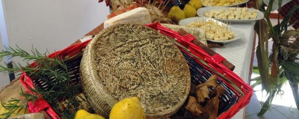 Val Brembilla, assaggi e incontri per celebrare lo Strachìtunt