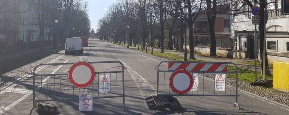 Addio agli ippocastani di Caravaggio Sul viale ne vanno abbattuti 50