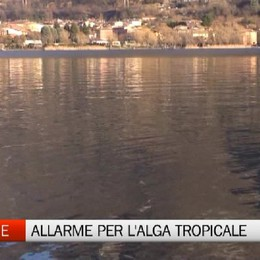 A Spinone spunta una misteriosa alga tropicale. In corso uno studio per capire da dove arrivi