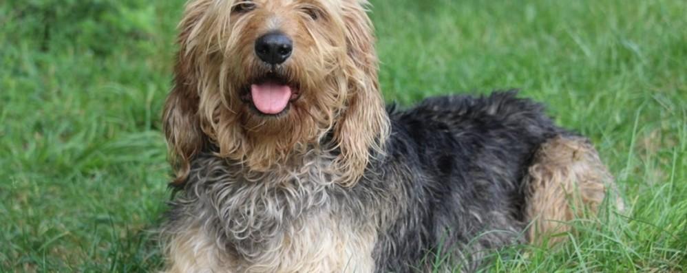 Come gestire la calma del cane