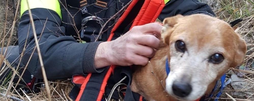 Cane cade per 100 metri in  una scarpata  Salvato dai Vigili del Fuoco a Clusone