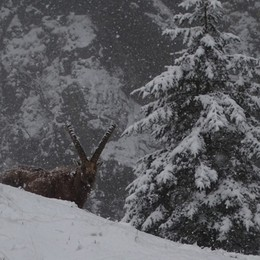 Una mattinata di pioggia in città In montagna neve a 900-1.000 metri