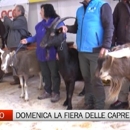 Ardesio, domenica la Fiera delle capre