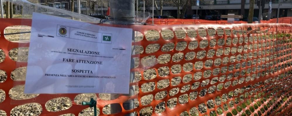 Bergamo, allarme bocconi avvelenati  Recintato il parco di via Goethe