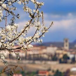 I fiori e i colori della primavera Più forti del virus - Le foto