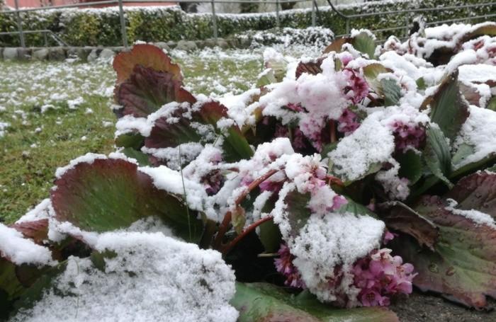 Neve a Cluosne